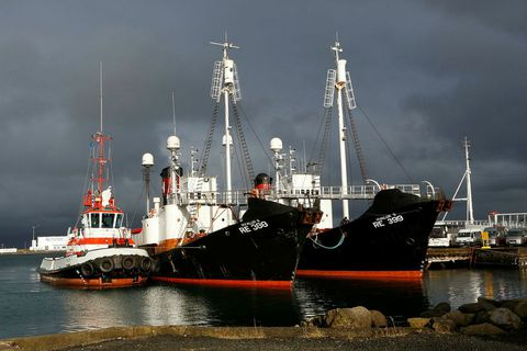 Whaling vessels Hvalur 8 and Hvalur 9 docked at Reykjavik harbour.