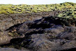 Skaftárhlaupið á dögunum skildi eftir mikinn framburð, sand og jökulleir, sem situr eftir í mosanum.