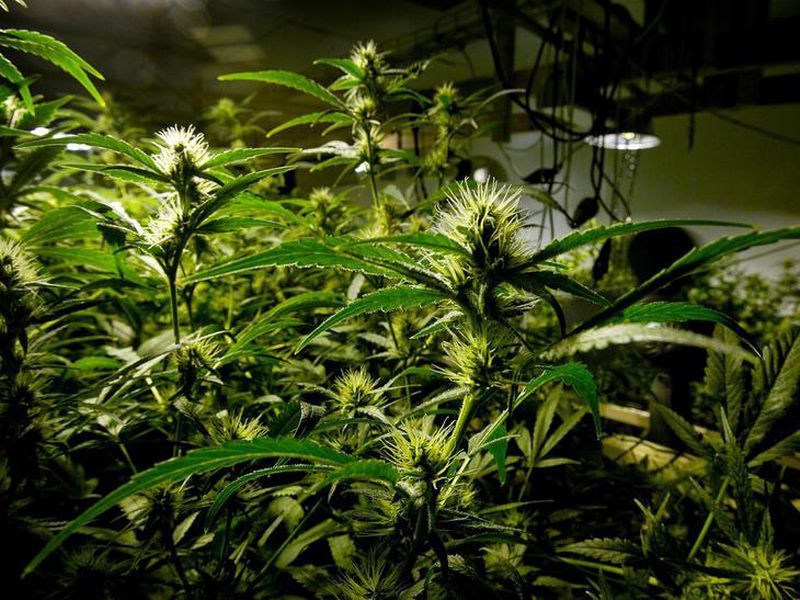 The cannabis was being grown at a private home in Þykkvibær.
