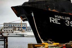 Skip Sea Shepherd, MV Brigitte Bardot, sést hér í fjarska en í forgrunni er Hvalur …