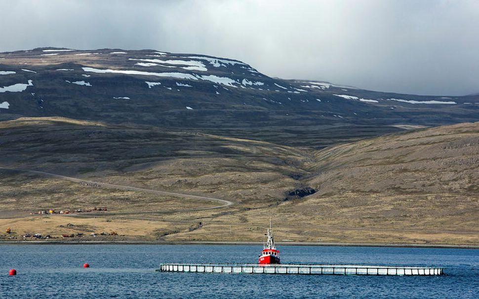 Fiskeldi við Hlaðseyri í Patreksfirði.