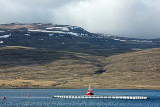 Fiskeldiskví við Hlaðseyri í Patreksfirði.