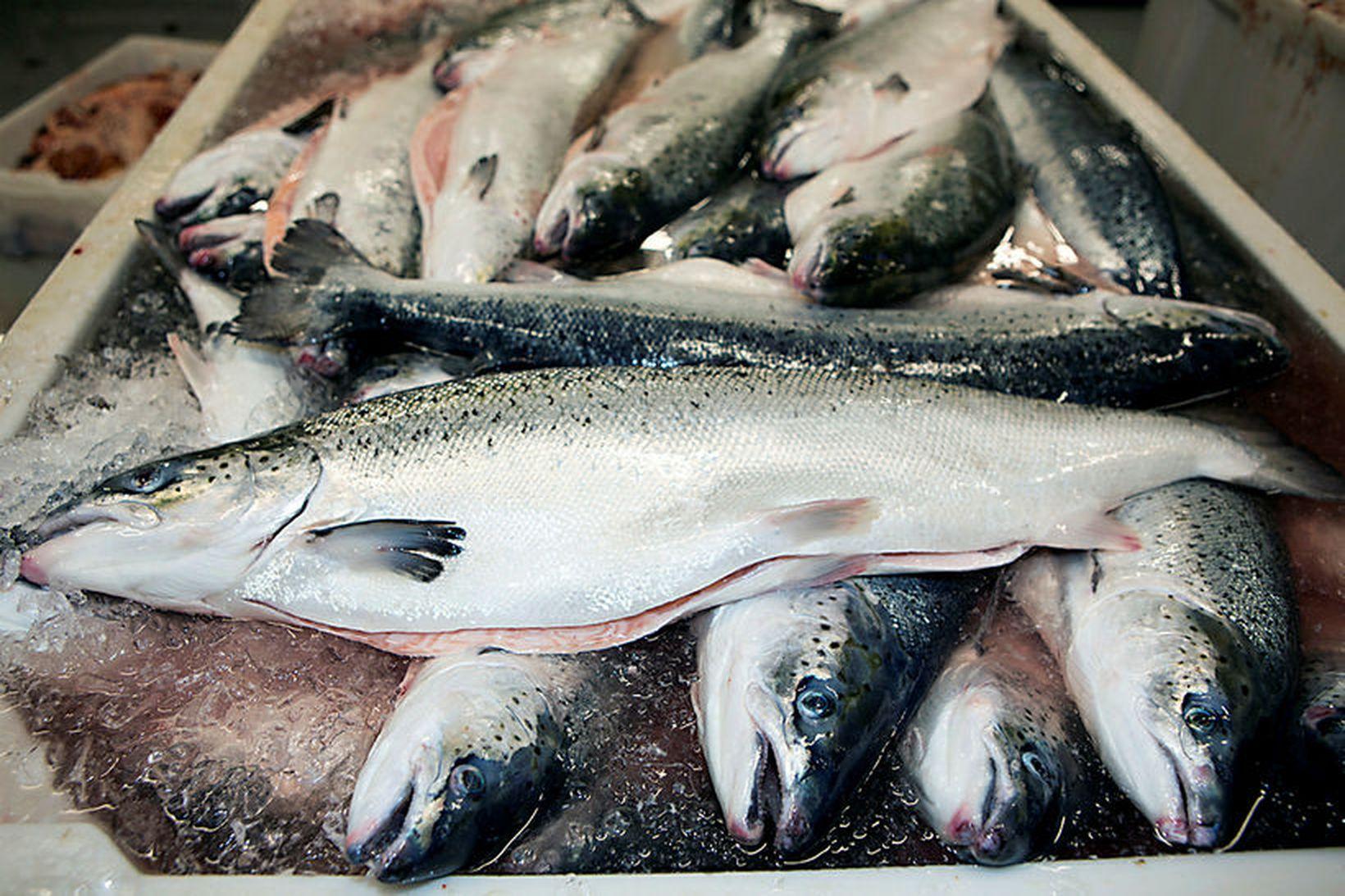 Arctic Sea Farm hf. heldur rekstrarleyfi sínu samkvæmt úrskurði umhverfis- …