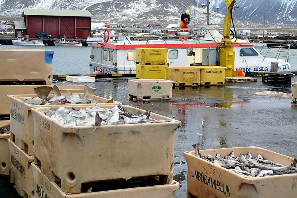 Samtök fiskframleiðenda og útflytjenda telja að reynt sé með kerfisbundnum ...