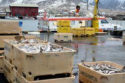 Samtök fiskframleiðenda og útflytjenda telja að reynt sé með kerfisbundnum hætti að útrýma fiskvinnslum sem ...