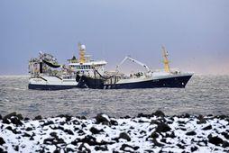 Polar Amaroq