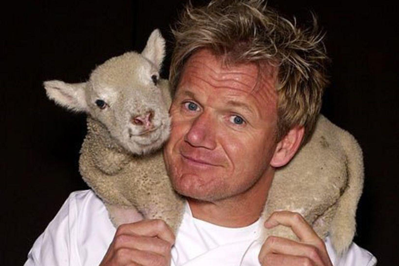 Kjaftfori kokkurinn Gordon Ramsay er hugsanlega að velta fyrir sér …