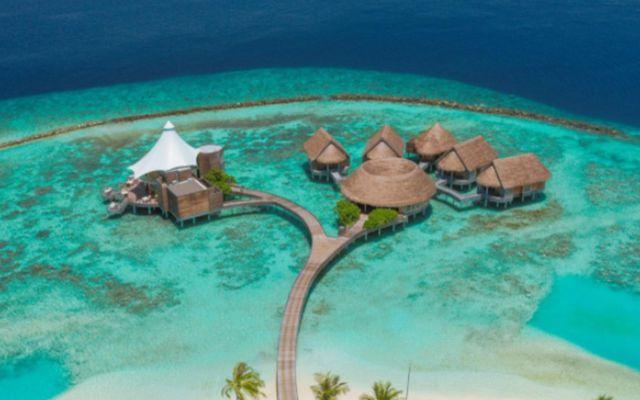 Nautilus einkaeyjan á Maldíveyjum.