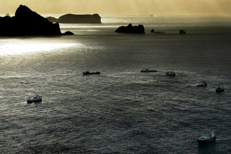 Loðnufloti við Vestmannaeyjar.
