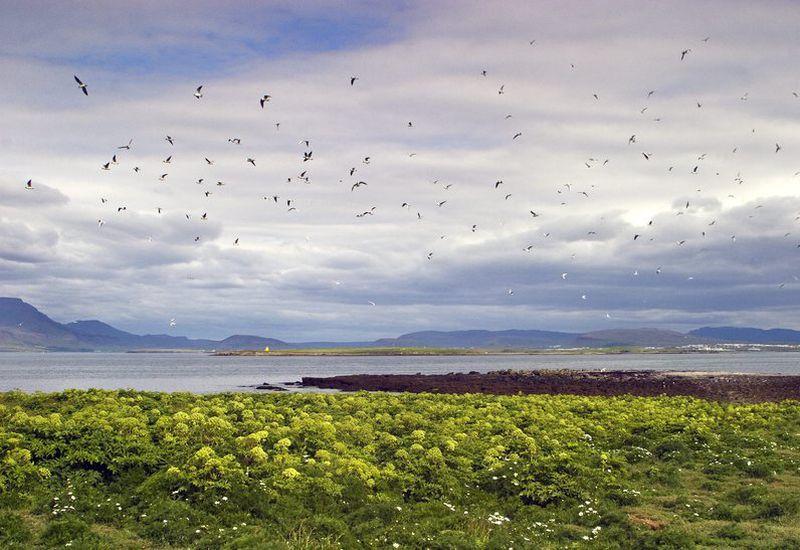 From Akurey island.