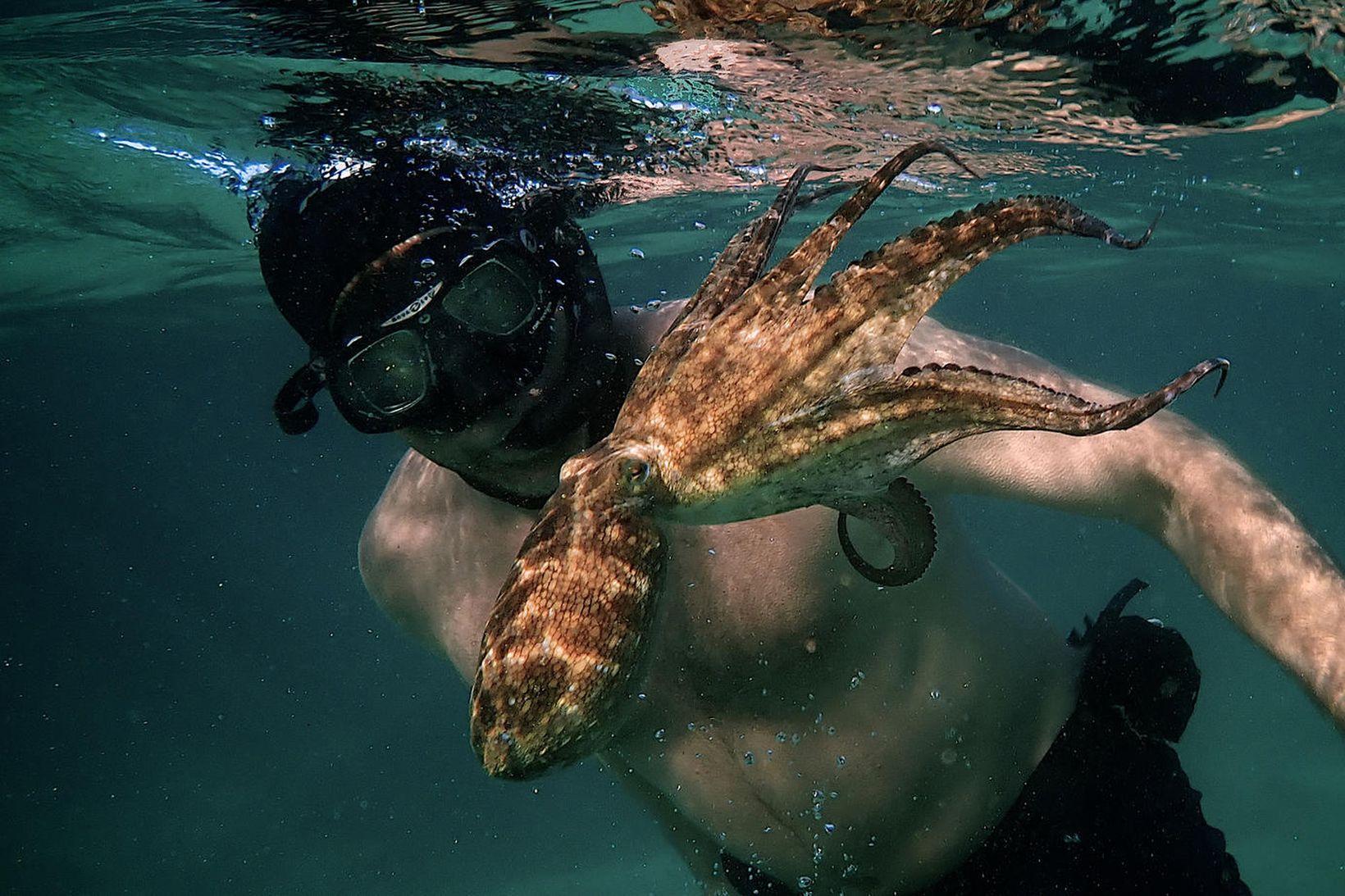 Craig Foster og kolkrabbinn í My Octopus Teacher.