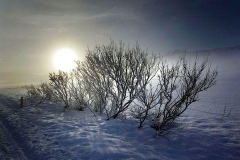 Mid winter sun.