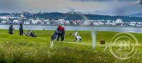 Krían ágeng við golfara á Seltjarnarnesvelli