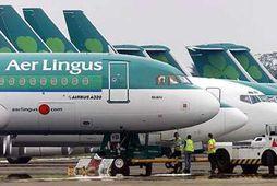 Flugmaður hjá Aer Lingus stakk upp á því að gefa teppin til dýraathvarfa.
