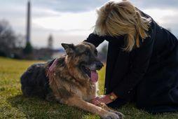 Jill Biden og hundurinn Champ.
