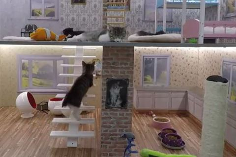 The kittens have a two storey wome with bunk beds and toys.