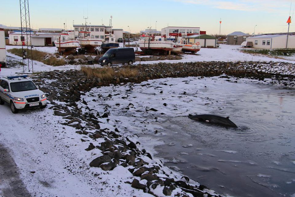 Lögreglan er í nánu sambandi við sérfræðinga vegna málsins.