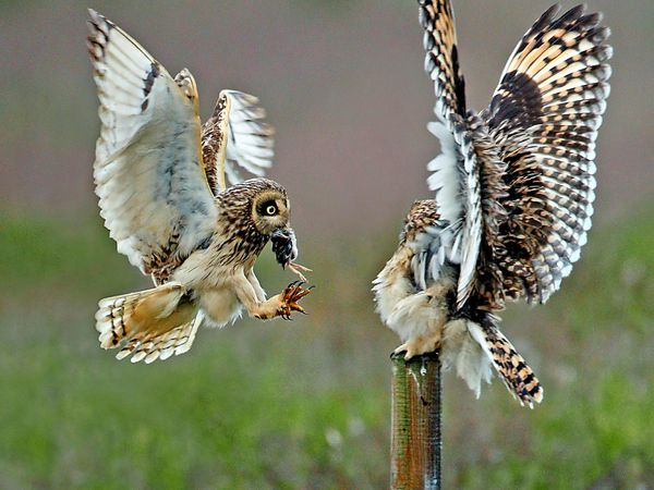 Air-delivery of an amazing meal.