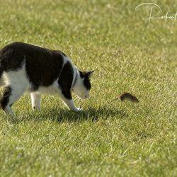 Tom & Jerry flight