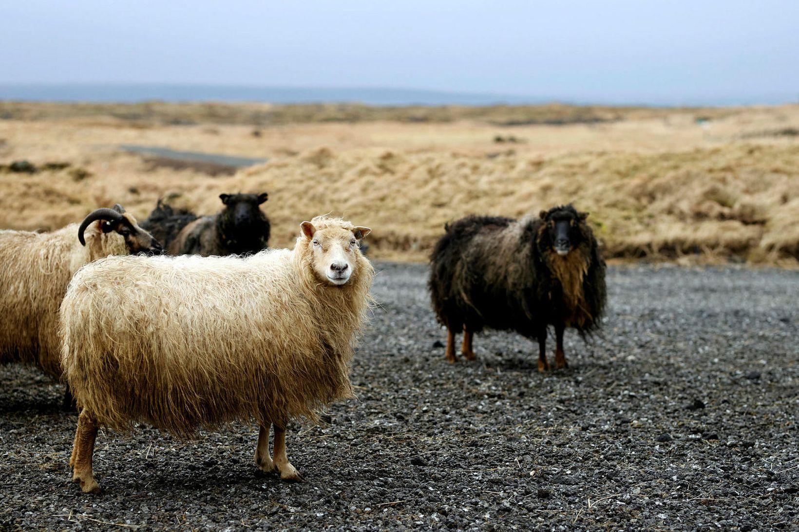 Riðuveiki hefur verið staðfest á bænum Syðra-Skörðugili í Skagafirði.