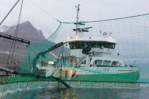 Árið 2020 virðist hafa verið gott í fiskeldisbransanum.