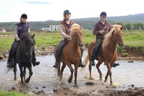 Garður Horse Farm