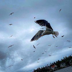 Fuglar Tjarnarinnar