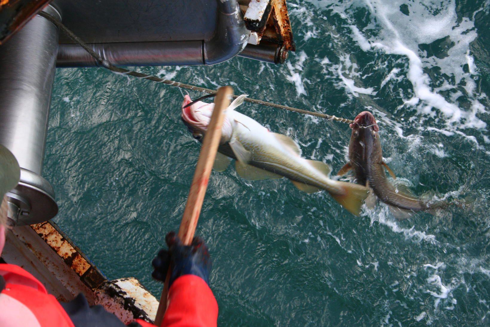 Afli íslenskra fiskiflotans dróst saman í janúar.