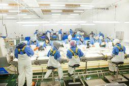 Í vinnslunni hjá AG-Seafood í Sandgerði Frumbyggjafyrirtæki í Alaska hefur keypt 25% hlut í félaginu.